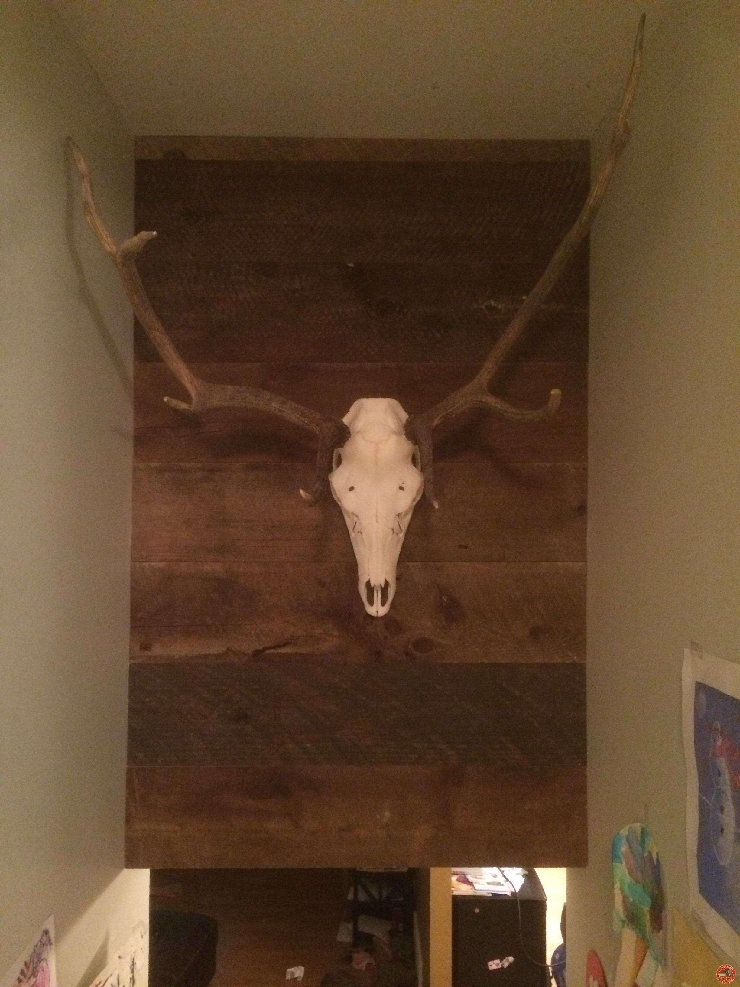 Reclaimed Wood Wall w/ Elk Head